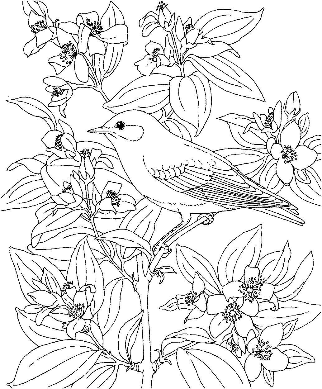 Птица в цветах Распечатать раскраски для мальчиков