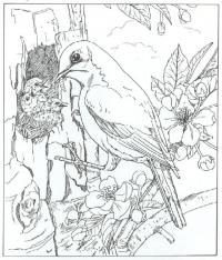 Птица кормит птенцов в дупле дерева, цветы Распечатать раскраски для мальчиков