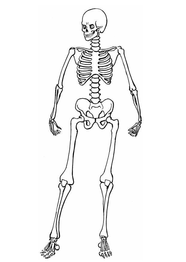 Скелет Раскраски для мальчиков бесплатно