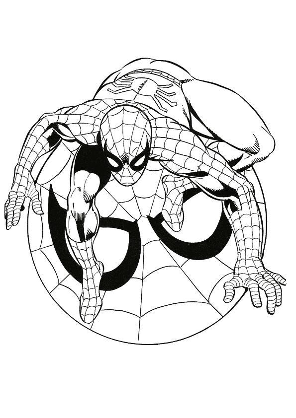 Человек паук на своей эмблеме Раскраски для детей мальчиков