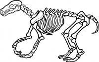Скелет динозавра Раскраски для мальчиков
