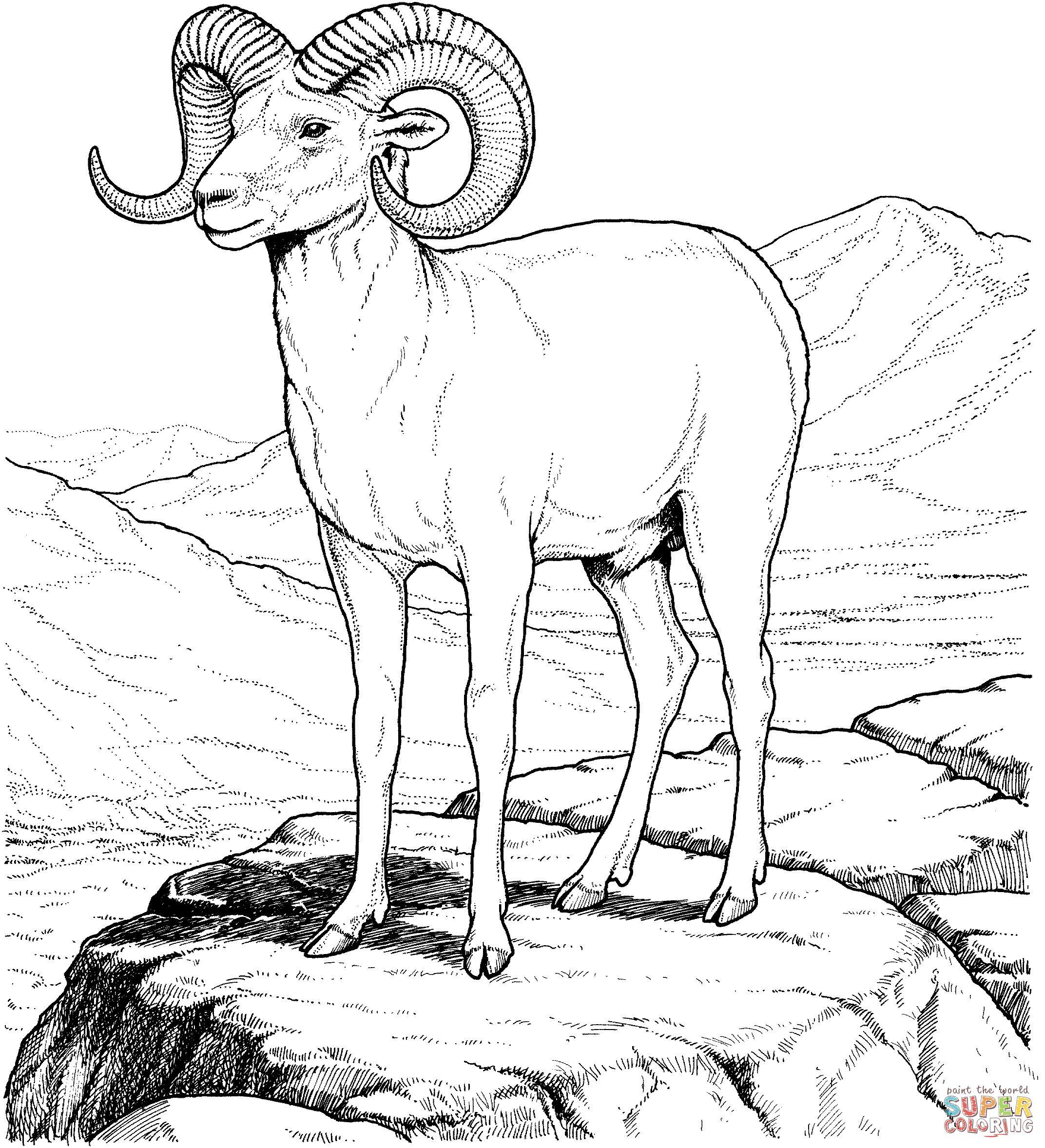 Горный козел, архар, козел с закрученными рогами, горы Скачать раскраски для мальчиков