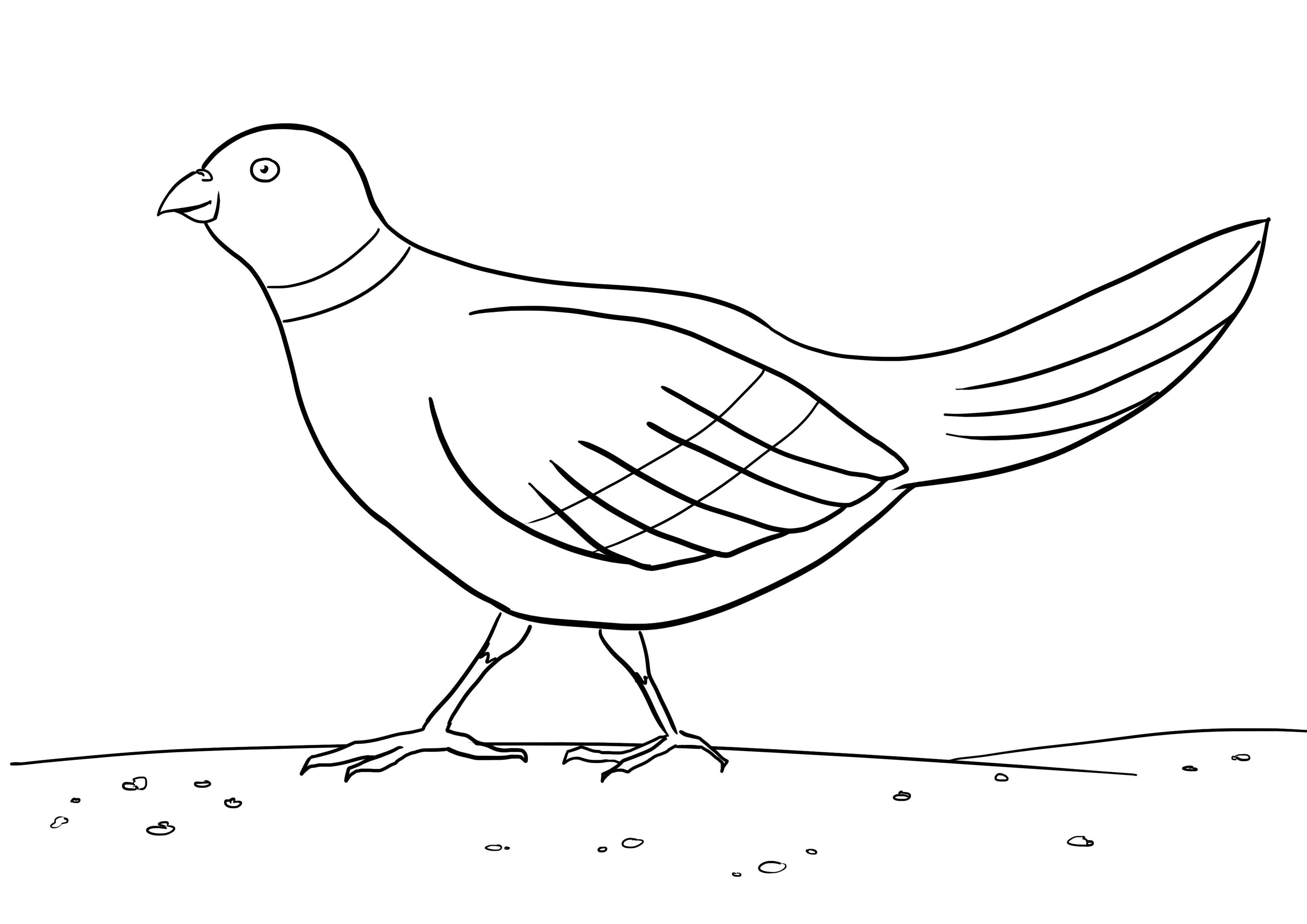 Птица Распечатать раскраски для мальчиков