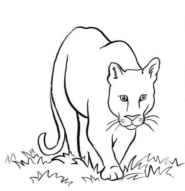 Дикая кошка крадется Скачать раскраски для мальчиков