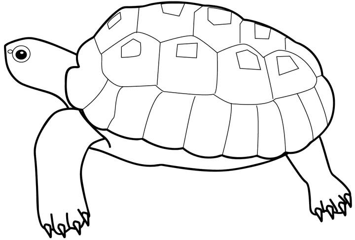 Черепаха Скачать раскраски для мальчиков