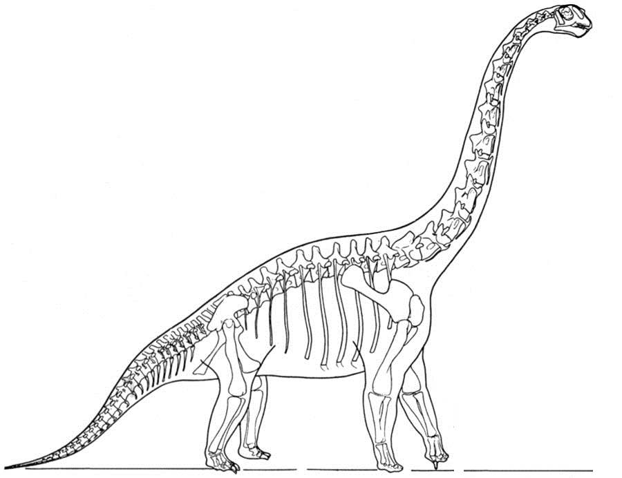 Скелет динозавра бронтозавра Раскраски для мальчиков бесплатно
