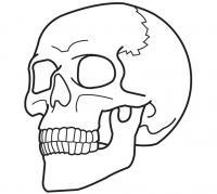 Человеческий череп Скачать раскраски для мальчиков