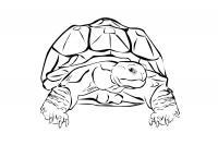 Черепаха с рельефным панцирем Скачать раскраски для мальчиков