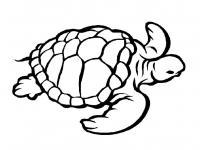 Черепаха вид сверху Скачать раскраски для мальчиков