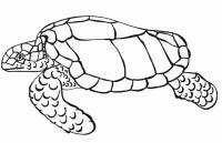 Черепаха ползет Скачать раскраски для мальчиков